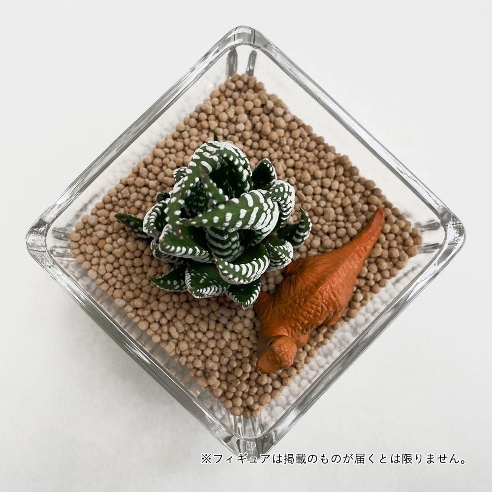 多肉植物ジオラマ ガラスフィギュア1個付き【別送品】