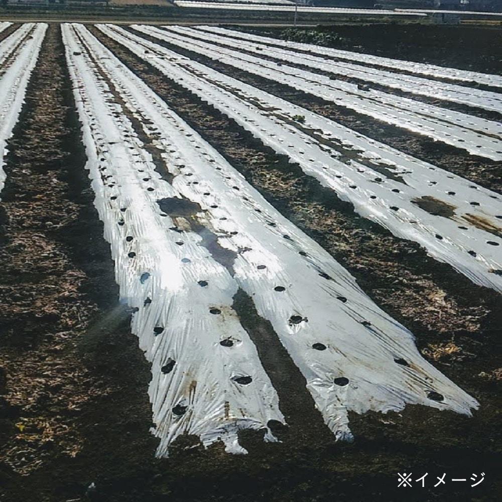 【ケース販売】白黒コカゲマルチ 0.02×180×200m×3本[4582142202536×3]