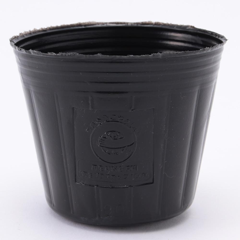 【数量限定】ポリ鉢 9cm 黒丸 100P