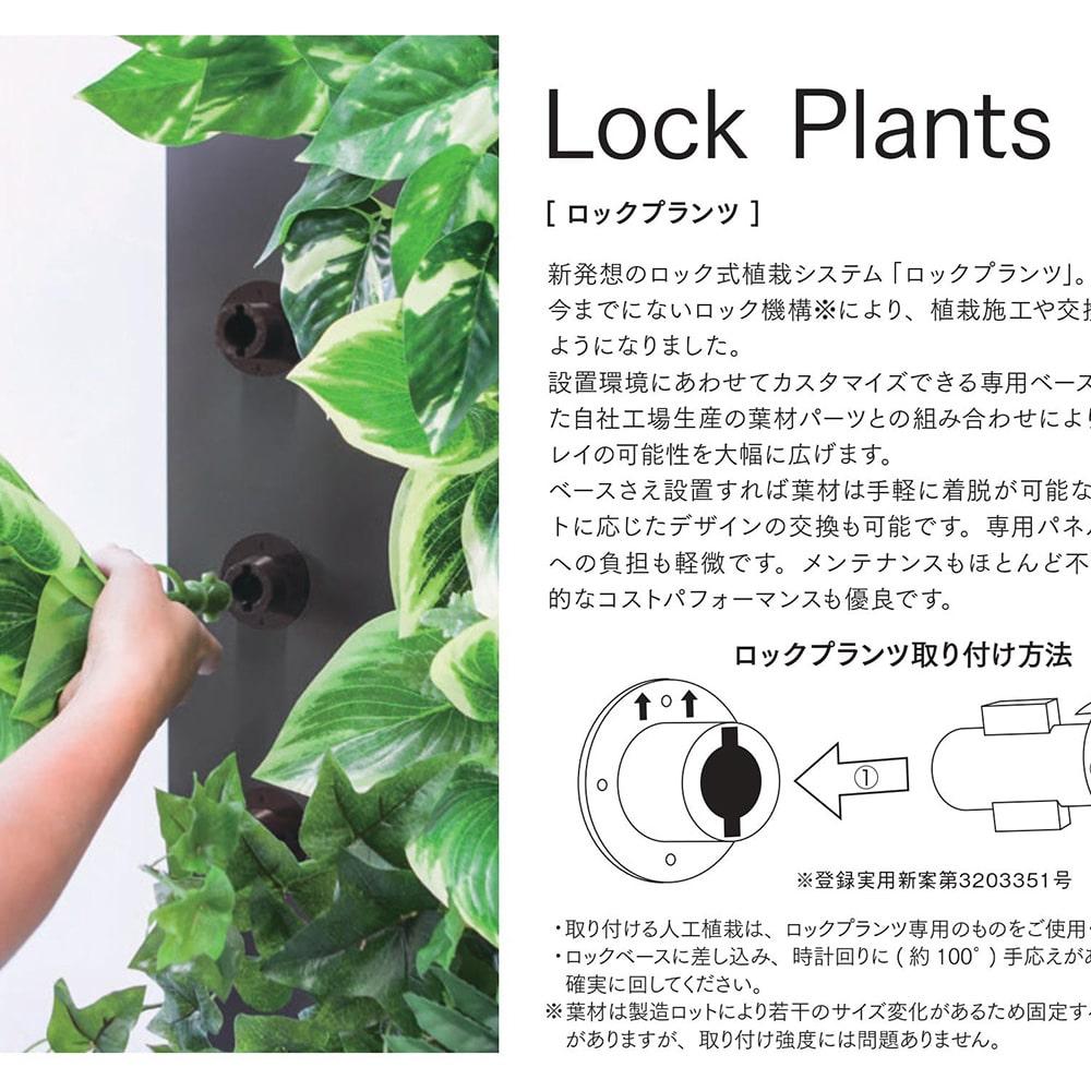 ロックプランツ クロトン GL-MB010