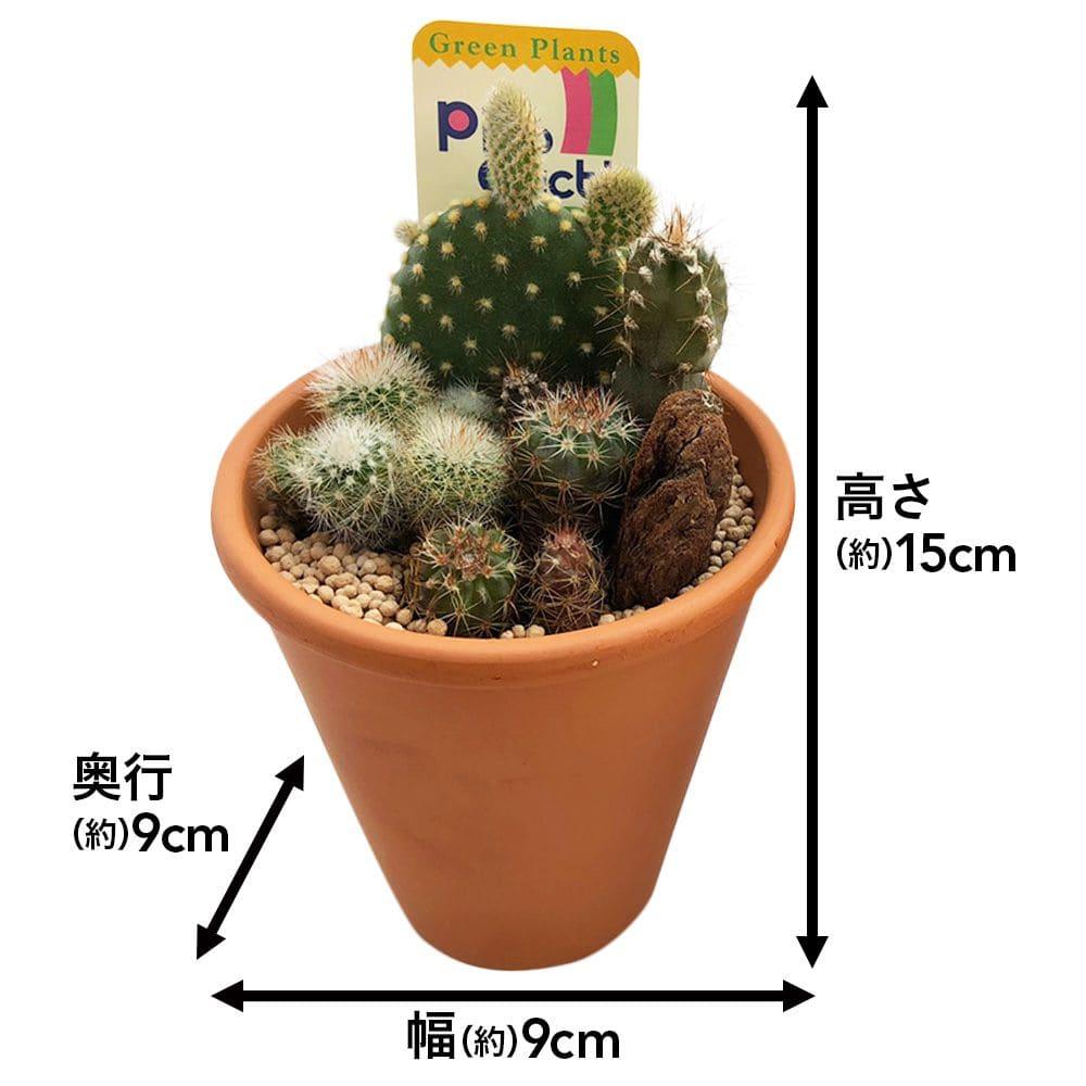 サボテンテラコッタ9cm寄せ植え2個セット【別送品】