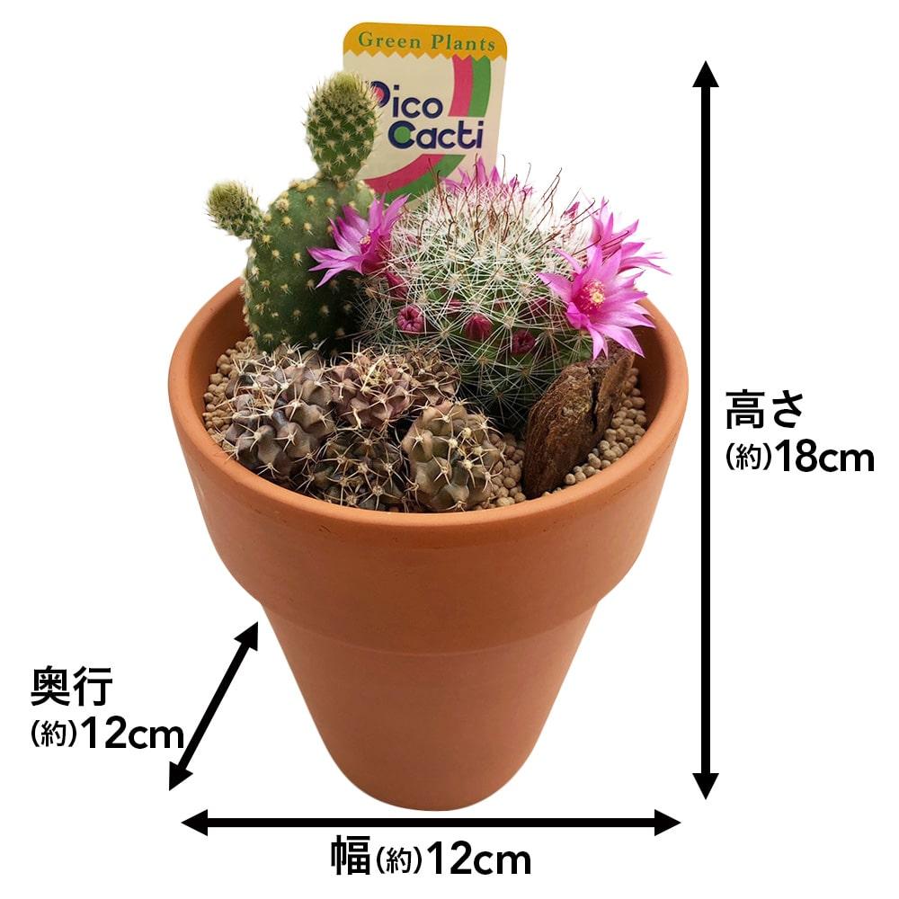 サボテンテラコッタ12cm寄せ植え【別送品】