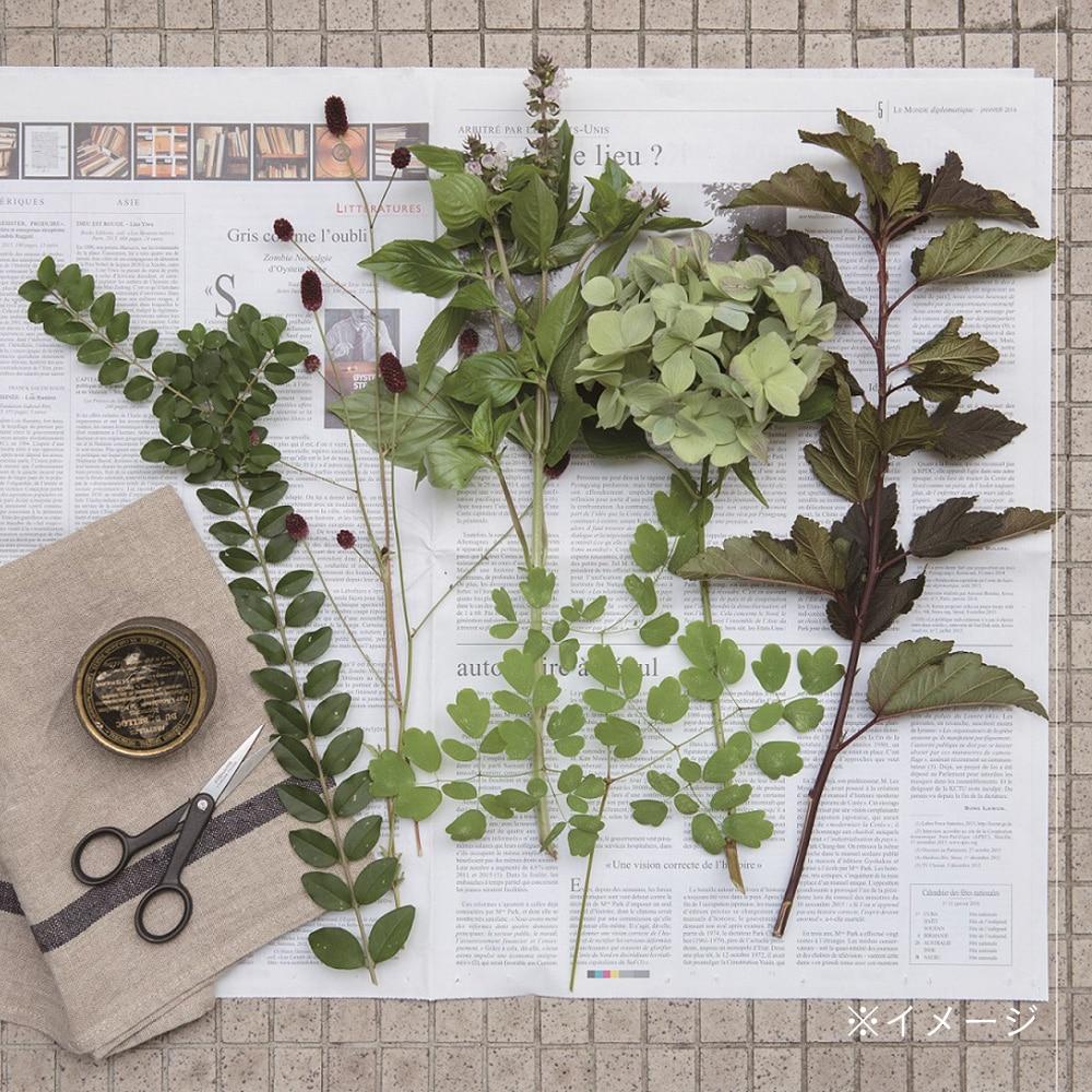 植物標本スターターキット