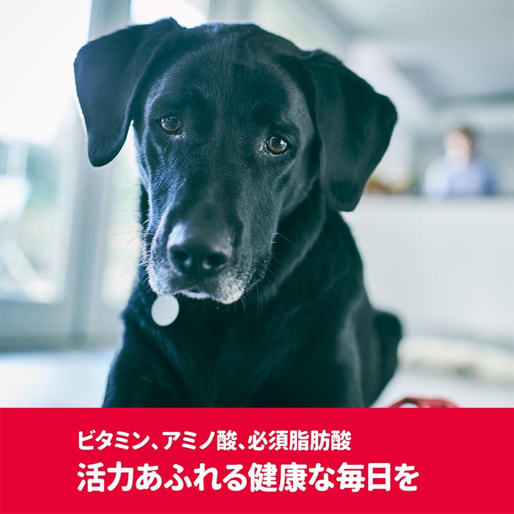【店舗限定】サイエンス・ダイエット<プロ>犬用 (健康ガード 活力) 小粒 1〜6歳 1.6kg