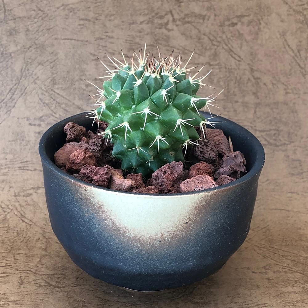 ブラック陶器鉢断琴丸10cm【別送品】