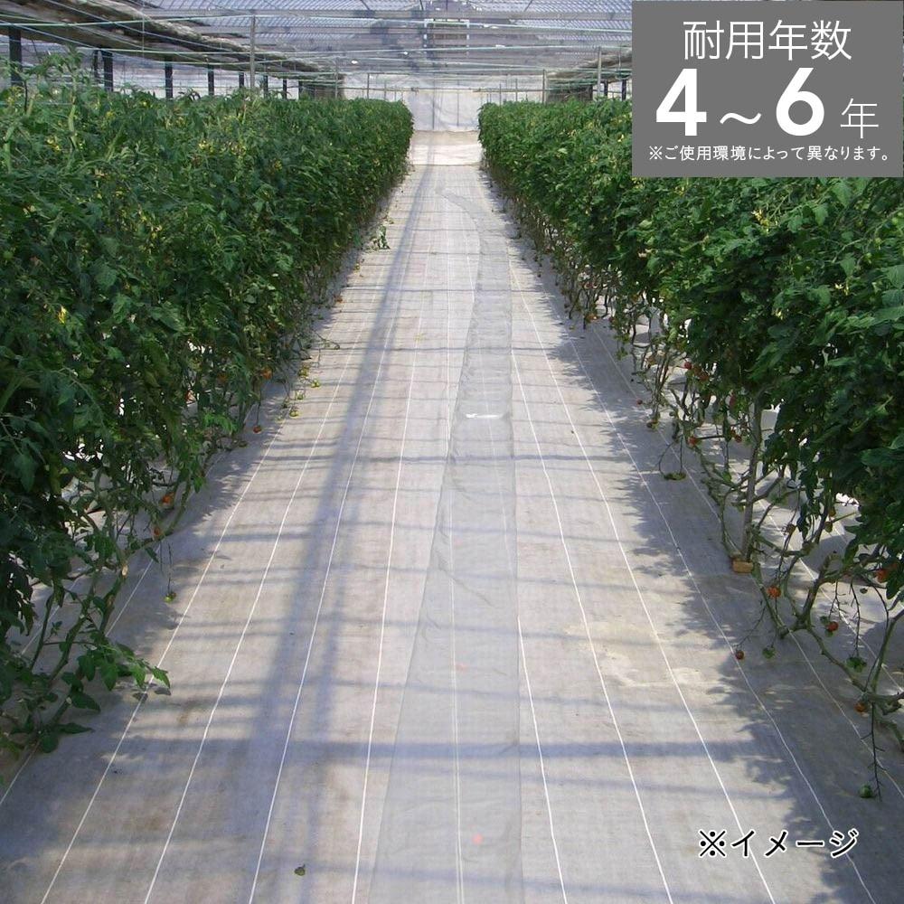 グランドシートS シルバー 3×100m