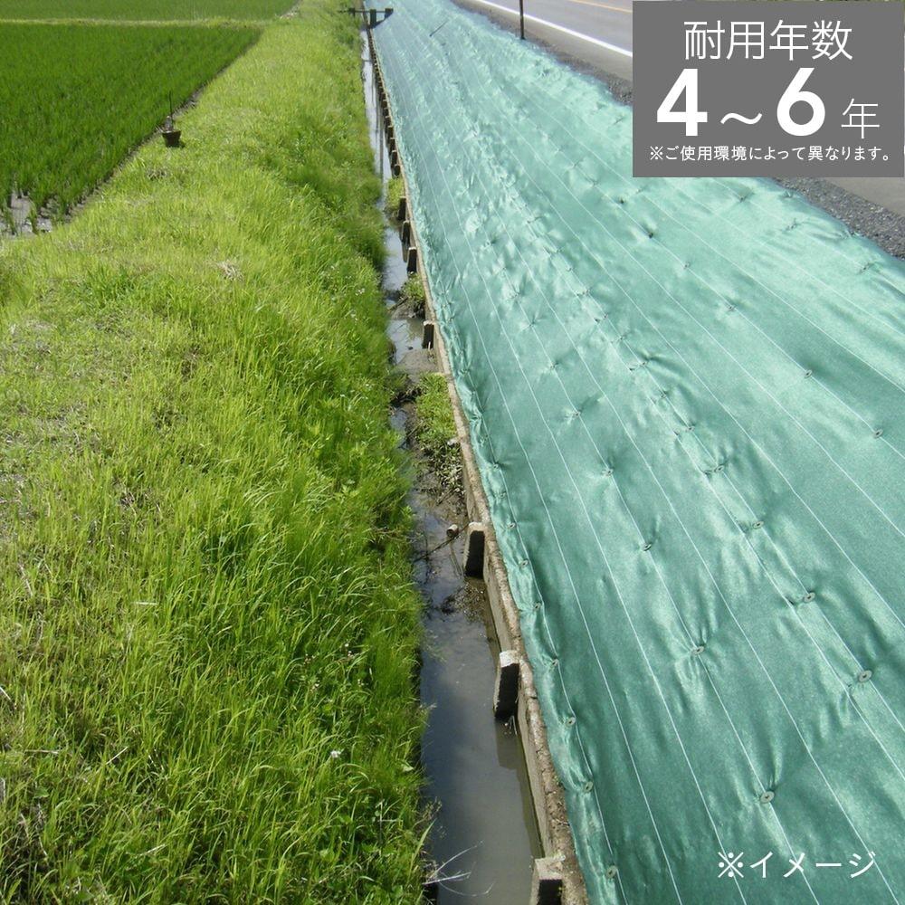畦クロス グリーン 1×100m