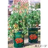 デルモンテ ミニトマトもうすぐ収穫栽培セット【別送品】
