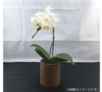 おうちファレノ1F(エコ鉢)白系【別送品】【要注文コメント】
