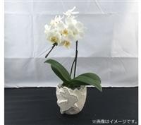 おうちファレノ1F(ランビット)白系【別送品】【要注文コメント】