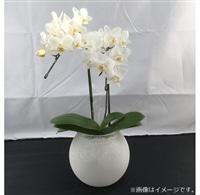 ファレノ ガラスラン 2F 白系【別送品】【要注文コメント】