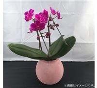 ファレノ ガラスラン 2F ピンク系【別送品】【要注文コメント】
