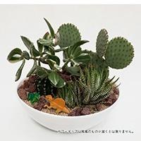 サボテンジオラマ フィギュア2個付き【別送品】
