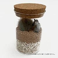 サボテンジオラマ コルク瓶フィギュア1個付き【別送品】
