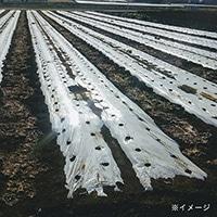 <ケース販売用単品JAN> 白黒コカゲマルチ 0.025×210×200m
