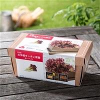 【訳あり商品】お手軽キッチン菜園 赤リーフレタス(有効期限2017年5月31日)