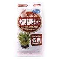 うさぎ大麦若葉栽培セット