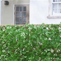 目隠しグリーンフェンス1×10m ライトグリーン