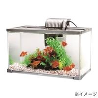 テトラ 観賞魚水槽セット(カインズ限定) AG-52