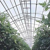 農PO イースター 0.1×150×100