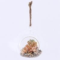 【trv・数量限定】ガラス多肉植物 M5
