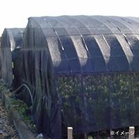 ダイオシート8号 黒 2×50m