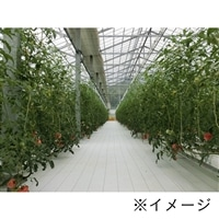 高反射防草シート ルンルンシート 白ピカ 0.75×100m