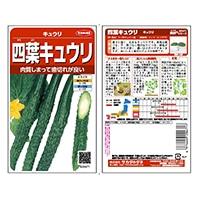 野菜の種 四葉キュウリ