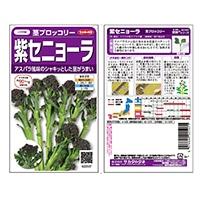 サカタのタネ 紫セニョーラ茎ブロッコリー