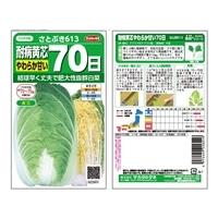 サカタのタネ 耐病黄芯70日型白菜さとぶき613