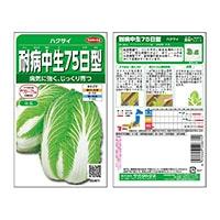 サカタのタネ 耐病中生75日型白菜