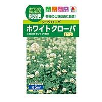 花の種 ホワイトクローバ