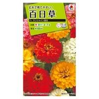 花の種 百日草 F1サンシャイン混合