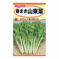 春まき山東菜