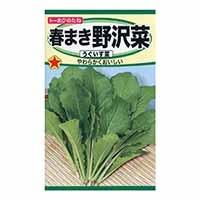 春まき野沢菜(うぐいす菜)