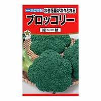 ブロッコリー  緑積
