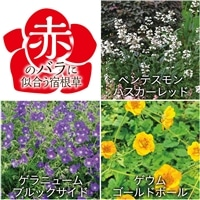 【2017年バラ苗予約販売】赤いバラに似合う宿根草セット【別送品】