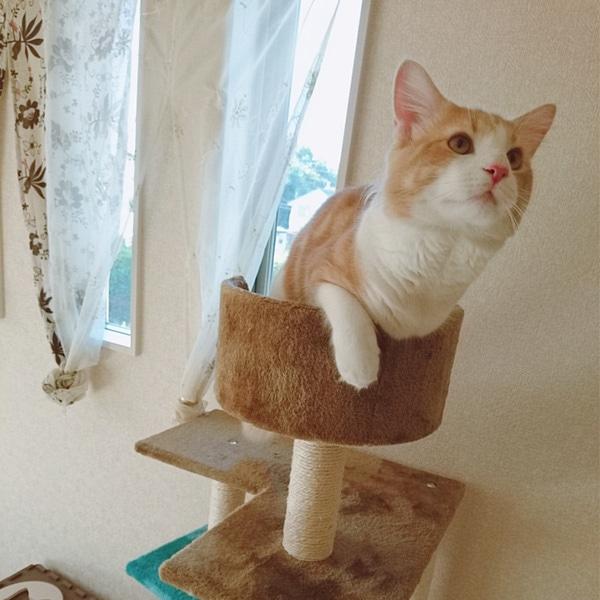猫と、暮らす。   ホームセンタ...